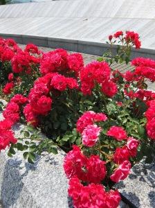 Roses at the memorial of Srebrenica.